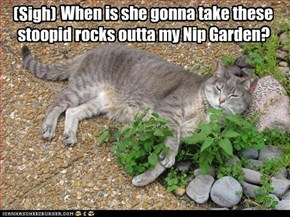 When is she gonna take these stoopid rocks outta my Nip Garden?