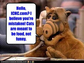 Hello, ICHC.com? I believe you're mistaken! Cats are meant to be food, not funny.