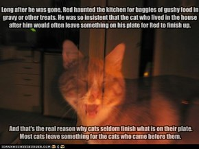 Long after he was gone, Red haunted the kitchen for baggies of gushy food in gravy or other treats. He was so insistent that the cat who lived in the house after him would often leave something on his plate for Red to finish up.
