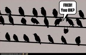 FRED! You OK?