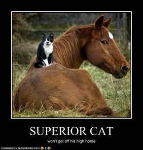 SUPERIOR CAT