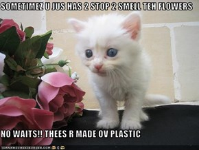 SOMETIMEZ U JUS HAS 2 STOP 2 SMELL TEH FLOWERS  NO WAITS!! THEES R MADE OV PLASTIC
