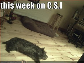 this week on C.S.I