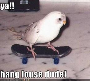 ya!!  hang louse dude!