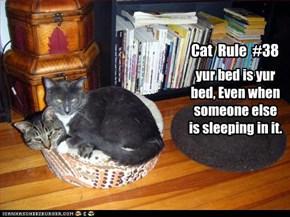 Cat  Rule  #38