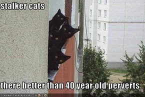 stalker cats  there better than 40 year old perverts