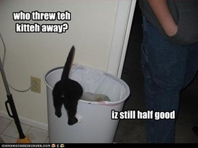who threw teh kitteh away?