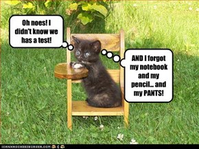 Apparently, even kittehs has this nightmare...