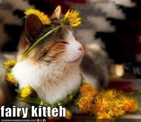 fairy kitteh