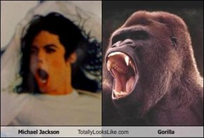 Michael Jackson Totally Looks Like Gorilla