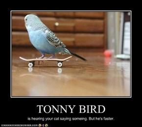 TONNY BIRD