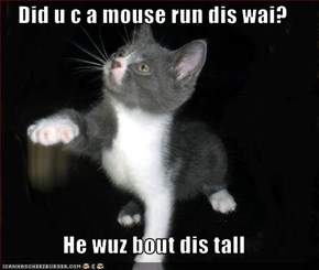 Did u c a mouse run dis wai?  He wuz bout dis tall