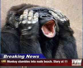 Breaking News - Monkey stumbles into nude beach. Story at 11