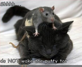 Shhhh...    do NOT wake the putty tat