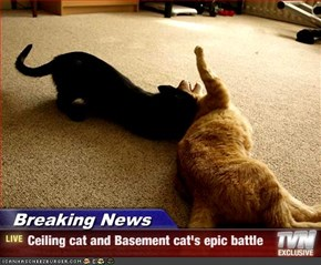 Breaking News - Ceiling cat and Basement cat's epic battle