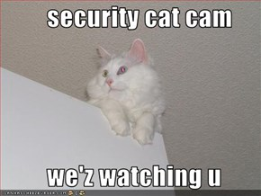 security cat cam           we'z watching u