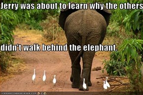 Jerry was about to learn why the others didn't walk behind the elephant.