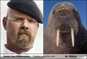Jamie from Mythbusters Totally Looks Like Mr. Walrus