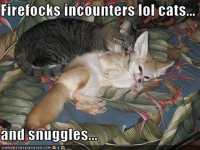 Firefocks incounters lol cats...  and snuggles...