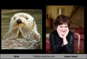 otter Totally Looks Like susan boyal