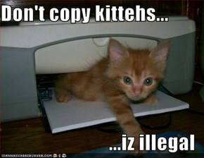 Don't copy kittehs...  ...iz illegal
