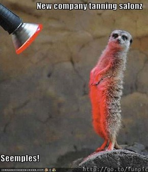 New company tanning salonz  Seemples!