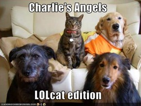 Charlie's Angels  LOLcat edition