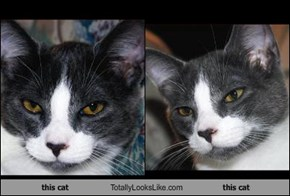 this cat Totally Looks Like this cat