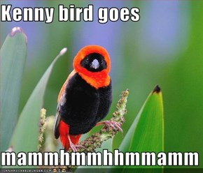 Kenny bird goes  mammhmmhhmmamm