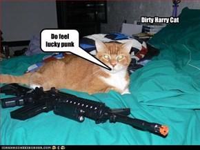 Dirty Harry Cat