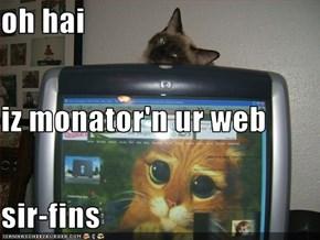 oh hai iz monator'n ur web sir-fins