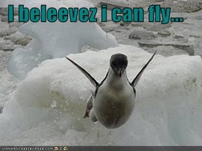 I beleevez i can fly...
