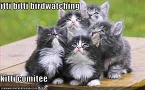 itti bitti birdwatching   kitti comitee