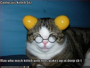 Confucuis Kitteh Sez  Man who mock kitteh with runs wakes up in deep sh*t