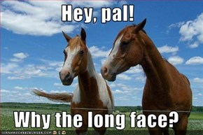 Hey, pal!  Why the long face?
