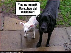 Yes, my name IS Mary....how did you know??