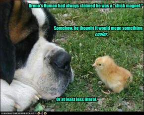 "Bruno's Human had always claimed he was a ""chick magnet."""