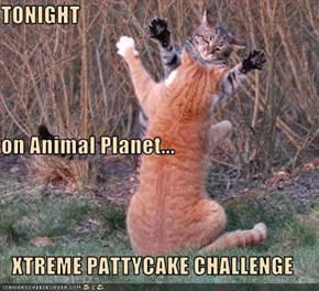 TONIGHT on Animal Planet... XTREME PATTYCAKE CHALLENGE