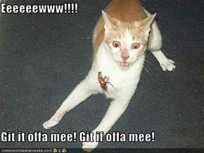 Eeeeeewww!!!!  Git it offa mee! Git if offa mee!