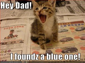 Hey Dad!  I foundz a blue one!