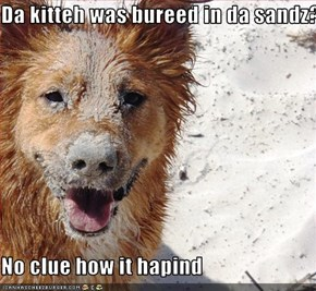 Da kitteh was bureed in da sandz?  No clue how it hapind