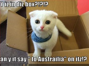 "Y iz in diz box?!?!?  an y it say "" to Austrailia"" on itz!?"