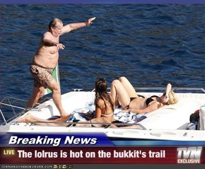 Breaking News - The lolrus is hot on the bukkit's trail