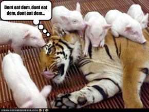 Dont eat dem, dont eat dem, dont eat dem...