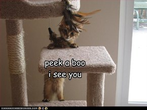peek a boo i see you