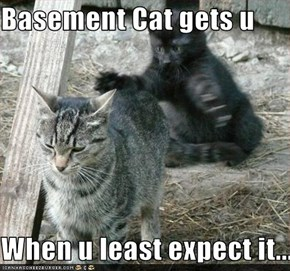 Basement Cat gets u  When u least expect it...