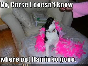 No, Corse I doesn't know  where pet flaminko gone.