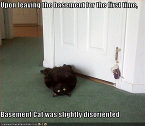Upon leaving the basement for the first time,  Basement Cat was slightly disoriented