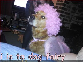 i is ta dog fairy