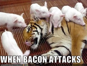 WHEN BACON ATTACKS